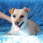 Бисквит собака из приюта на пристройство, частный приют для бездомных животных Зов Предков zovpredkov.net фото 3