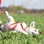 Баунти собака из приюта на пристройство, частный приют для бездомных животных Зов Предков zovpredkov.net фото 1