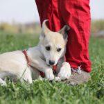 Баунти собака из приюта на пристройство, частный приют для бездомных животных Зов Предков zovpredkov.net фото 6