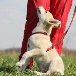 Баунти собака из приюта на пристройство, частный приют для бездомных животных Зов Предков zovpredkov.net фото 5