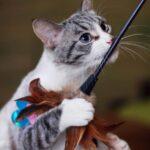 Сапфир кот из приюта на пристройство приют для бездомных животных Зов Предков zovpredkov.net фото 1