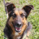 Федор II собака из приюта на пристройство частный приют для бездомных животных Зов Предков zovpredkov.net фото 8