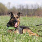 Федор II собака из приюта на пристройство частный приют для бездомных животных Зов Предков zovpredkov.net фото 5