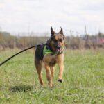Федор II собака из приюта на пристройство частный приют для бездомных животных Зов Предков zovpredkov.net фото 1