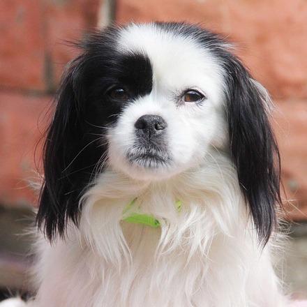 Сакура собака из приюта на пристройство, частный приют для бездомных животных Зов Предков zovpredkov.net