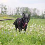 Брэнди собака из приюта на пристройство, частный приют для бездомных животных Зов Предков zovpredkov.net фото 5
