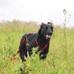Брэнди собака из приюта на пристройство, частный приют для бездомных животных Зов Предков zovpredkov.net фото 11