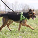 Федор II собака из приюта на пристройство частный приют для бездомных животных Зов Предков zovpredkov.net фото 4
