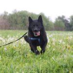 Джордан собака из приюта на пристройство, частный приют для бездомных животных Зов Предков zovpredkov.net фото 2