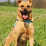 Фанта собака из приюта на пристройство, частный приют для бездомных животных Зов Предков zovpredkov.net фото 5