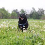 Джордан собака из приюта на пристройство, частный приют для бездомных животных Зов Предков zovpredkov.net фото 1