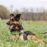 Федор II собака из приюта на пристройство частный приют для бездомных животных Зов Предков zovpredkov.net фото 3