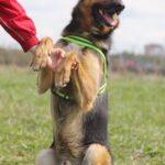 Федор II собака из приюта на пристройство частный приют для бездомных животных Зов Предков zovpredkov.net фото 2