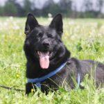 Джордан собака из приюта на пристройство, частный приют для бездомных животных Зов Предков zovpredkov.net фото 7