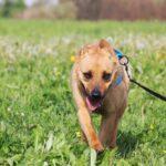 Фанта собака из приюта на пристройство, частный приют для бездомных животных Зов Предков zovpredkov.net фото 1