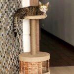 Шервуд кот из приюта на пристройство приют для бездомных животных Зов Предков zovpredkov.net фото 1