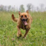 Искра собака из приюта на пристройство, частный приют для бездомных животных Зов Предков zovpredkov.net фото 2