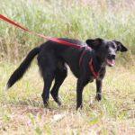 Джинджер собака из приюта на пристройство, частный приют для бездомных животных Зов Предков zovpredkov.net фото 2