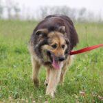 Фома собака из приюта на пристройство, частный приют для бездомных животных Зов Предков zovpredkov.net фото 5