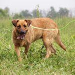 Искра собака из приюта на пристройство, частный приют для бездомных животных Зов Предков zovpredkov.net фото 4