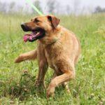 Искра собака из приюта на пристройство, частный приют для бездомных животных Зов Предков zovpredkov.net фото 5