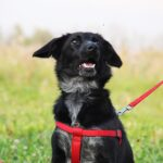 Джинджер собака из приюта на пристройство, частный приют для бездомных животных Зов Предков zovpredkov.net фото 16
