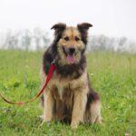 Фома собака из приюта на пристройство, частный приют для бездомных животных Зов Предков zovpredkov.net фото 6