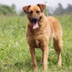 Искра собака из приюта на пристройство, частный приют для бездомных животных Зов Предков zovpredkov.net фото 3