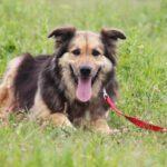 Фома собака из приюта на пристройство, частный приют для бездомных животных Зов Предков zovpredkov.net фото 8