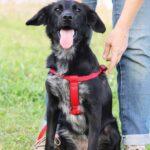 Джинджер собака из приюта на пристройство, частный приют для бездомных животных Зов Предков zovpredkov.net фото 9