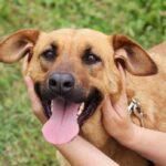 Искра собака из приюта на пристройство, частный приют для бездомных животных Зов Предков zovpredkov.net фото 7