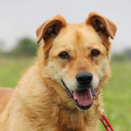Дюшес собака из приюта на пристройство частный приют для бездомных животных Зов Предков zovpredkov.net