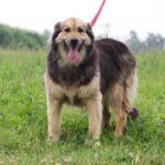 Фома собака из приюта на пристройство, частный приют для бездомных животных Зов Предков zovpredkov.net фото 2