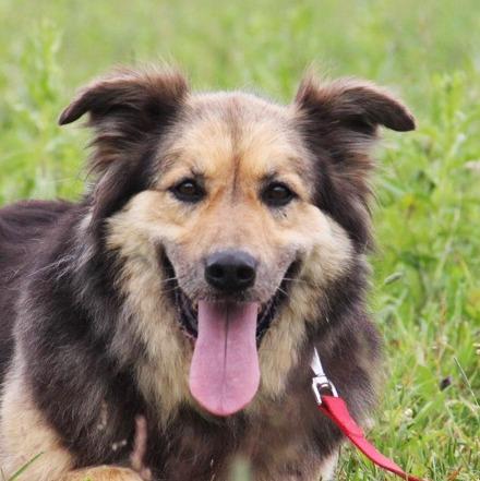 Фома собака из приюта на пристройство приют для бездомных животных Зов Предков zovpredkov.net
