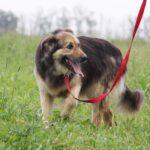Фома собака из приюта на пристройство, частный приют для бездомных животных Зов Предков zovpredkov.net фото 1