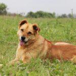 Дюшес собака из приюта на пристройство, частный приют для бездомных животных Зов Предков zovpredkov.net фото 7