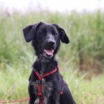 Джинджер собака из приюта на пристройство, частный приют для бездомных животных Зов Предков zovpredkov.net фото 6