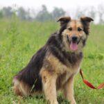Фома собака из приюта на пристройство, частный приют для бездомных животных Зов Предков zovpredkov.net фото 7