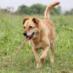 Дюшес собака из приюта на пристройство, частный приют для бездомных животных Зов Предков zovpredkov.net фото 1