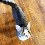Шервуд кот из приюта на пристройство приют для бездомных животных Зов Предков zovpredkov.net фото 3