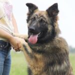 Эшли собака из приюта на пристройство, частный приют для бездомных животных Зов Предков zovpredkov.net фото 1