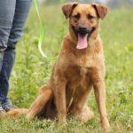 Искра собака из приюта на пристройство, частный приют для бездомных животных Зов Предков zovpredkov.net фото 6