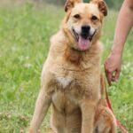 Дюшес собака из приюта на пристройство, частный приют для бездомных животных Зов Предков zovpredkov.net фото 6
