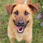 Искра собака из приюта на пристройство, частный приют для бездомных животных Зов Предков zovpredkov.net фото 8