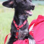Джинджер собака из приюта на пристройство, частный приют для бездомных животных Зов Предков zovpredkov.net фото 1