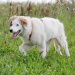 Бьянка собака из приюта на пристройство частный приют для собак Зов Предков фото 5