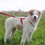 Бьянка собака из приюта на пристройство частный приют для собак Зов Предков фото 6