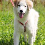 Бьянка собака из приюта на пристройство частный приют для собак Зов Предков фото 3