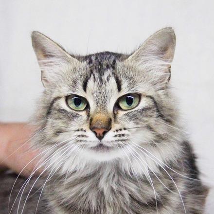 Бэль кошка из приюта на пристройство приют для животных Зов Предков zovpredkov.net