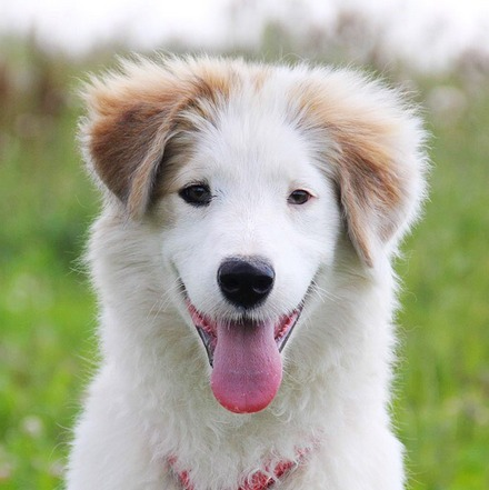 Бьянка собака из приюта на пристройство, частный приют для бездомных животных Зов Предков